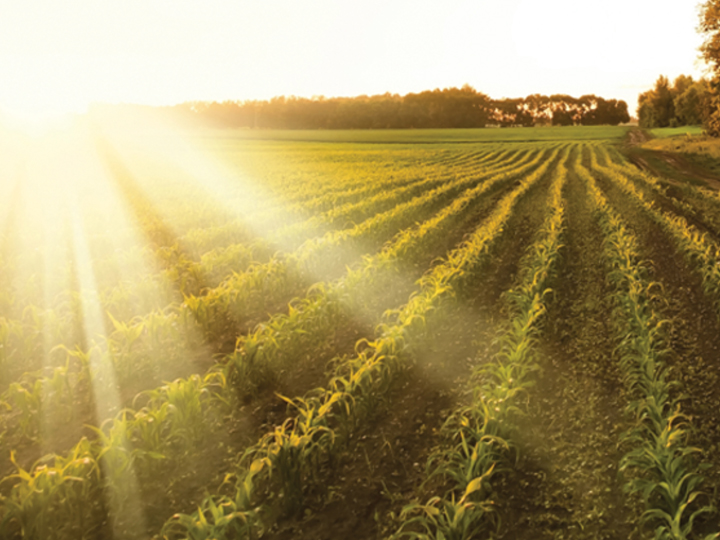 CAHS Scientists Published on Effect of Drought on Crop Production and Cropping Areas in Texas
