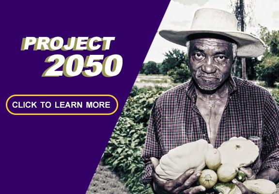 Project 2050 thumbnail